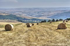 Cornfield plowed hay bales. Agriculture royalty free stock image