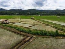 Cornfield. Rice fields in Thailand Stock Photo