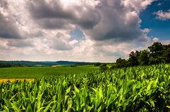 Cornfield and rolling hills of rural Southern York County, PA Stock Photo