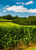 Cornfield and rollings hills in Southern York County, PA Royalty Free Stock Photo