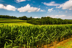 Cornfield and rollings hills in Southern York County, PA Royalty Free Stock Photography