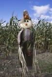Cornfield Scarecrow Stock Images