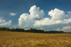 Cornfield and sky with clouds Stock Photos