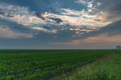 Cornfield after a storm  sunlight peeping through the clouds stock image