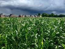 Cornfield with storm coming in Stock Photography