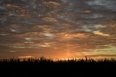 CORNFIELD AT SUNRISE WITH CLOUDS IN SKY. The tops of a cornfield stand as a silhouette against a brilliant sunrise royalty free stock photography