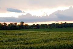 Cornfield Sunset royalty free stock photos