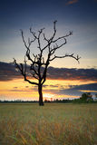 Cornfield. Sunset of Thailand Royalty Free Stock Image