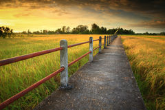Cornfield. Sunset of Thailand. Bridge over the Stock Images