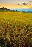 Cornfield sunset of Thailand. Royalty Free Stock Image