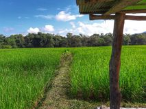 Field. At Thungyen,Thailand Royalty Free Stock Photography