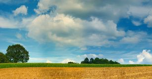 Cornfield and tree panorama. Stitched panorama image of a cornfield and trees under a blue sky Royalty Free Stock Photo