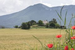 Cornfield and typical provence house in summer with mountains in the background between Digne and Briancon. Cornfield with poppies and typical provence house in stock images