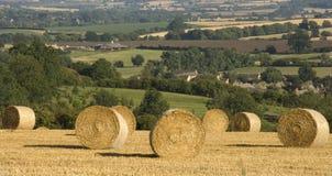 Cornfield van Haybales landbouwlandschap royalty-vrije stock afbeelding
