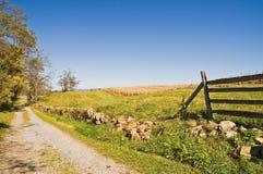 Cornfield van het land in Daling met Blauwe Hemel Stock Foto
