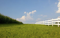 Cornfield and White Fence--Horizontal. Cornfield, swath of green grass, crisp white fence.   Bright blue sky with puffy white clouds.  Rural New Jersey Stock Photography