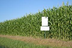 Cornfield with white sign Stock Images