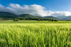 French countryside - Vercors. Cornfield on a windy day in the French Department of Drome with the mountains of Vercors in the background stock photos
