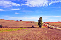 Cornfieldlandskap i landskapet av Soria, Spanien Royaltyfri Bild