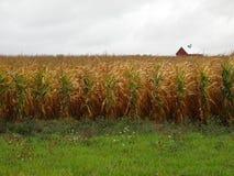 cornfieldlantbrukarhem för 66 american nära rt Royaltyfri Bild