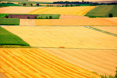Cornfields Royalty Free Stock Photos