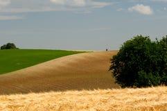 cornfields στοκ εικόνες