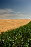 cornfields Στοκ Φωτογραφία