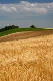 cornfields στοκ φωτογραφίες με δικαίωμα ελεύθερης χρήσης