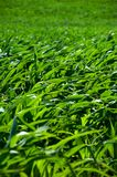 cornfields στοκ εικόνα