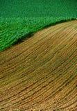 cornfields στοκ φωτογραφία με δικαίωμα ελεύθερης χρήσης