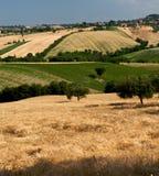 cornfields στοκ εικόνα με δικαίωμα ελεύθερης χρήσης