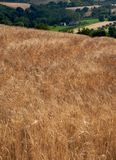 cornfields στοκ εικόνες με δικαίωμα ελεύθερης χρήσης