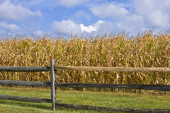 Cornfields Royalty Free Stock Images