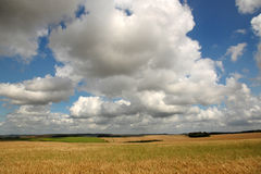Cornfields and clouds Stock Photography