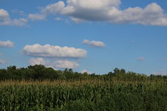 Cornfields Royalty Free Stock Photography