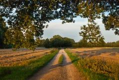 Cornfields i Laren, Nederländerna Arkivbilder