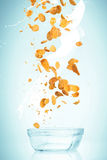 The cornflakes falling with milk stream Royalty Free Stock Photo