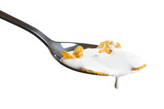 Cornflakes on the spoon with milk Stock Image
