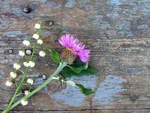 Cornflower и ландыш стоковые изображения rf