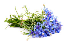 Cornflower. Bouquet isolated on white background Stock Photography