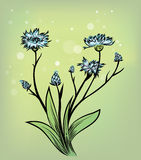 Cornflower. Illustration of medicinal herb cornflower Royalty Free Stock Photos