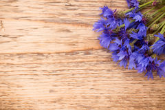 cornflower stock afbeelding