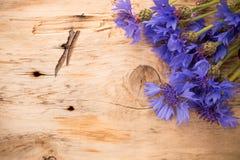 cornflower stock foto