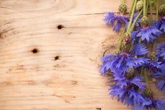 cornflower stock afbeeldingen