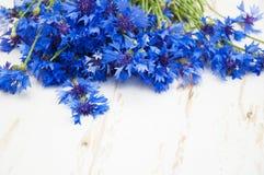 cornflower stock fotografie