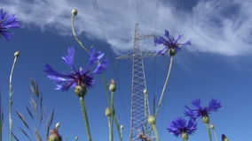Cornflower blossoms and high voltage post stock footage