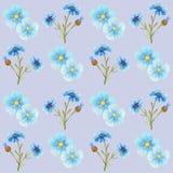 Cornflower blue flowers pattern watercolor illustration seamless stock photo