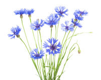 cornflower Boeket van wilde blauwe bloemen stock afbeeldingen