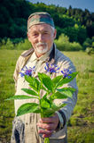 Cornflower bouquet in the hand of smiling senior man. Royalty Free Stock Images