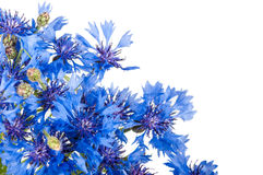 Cornflower. Bouquet of wild blue flowers. Stock Images